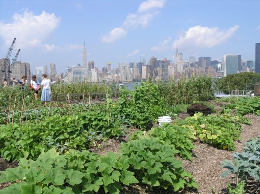 Rooftop Gardens in Greenpoint, Brooklyn