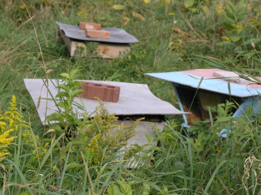 Handmade Hives of Anarchy in the Grass