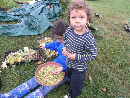 Shelling Soybeans & Learning Early